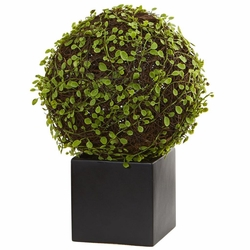 """13"""" Mohlenbechia Ball Artificial Plant in Black Cube"""