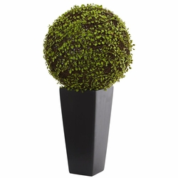 2.5' Mohlenbechia Ball Artificial Plant in Black Tower Vase