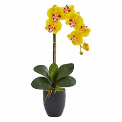 "22.5"" Phalaenopsis Orchid Artificial Arrangement in Black Vase"