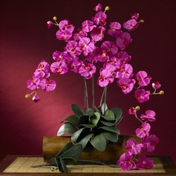 "31"" Phalaenopsis Silk Orchid Flower Stems w/Leaves (6 Stems - Non Potted) - Beauty Color"