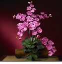 "31.5"" Phalaenopsis Stem (Set of 12 Stems - Non Potted)"