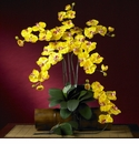 "31.5"" Phalaenopsis Stem (Set of 12 Stems - Non Potted) - Gold"