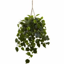 "36"" Philodendron Hanging Basket UV Resistant (Indoor/Outdoor)"