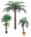 Phoenix, Coconut and Fan Palm Trees