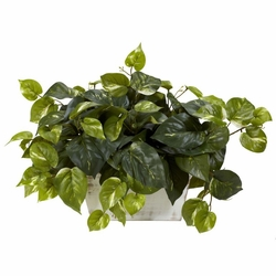 "14"" Pothos with White Wash Planter Silk Plant"