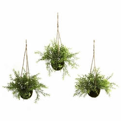 "9 "" Ruscus, Sedum & Springeri Hanging Basket (Set of 3)"