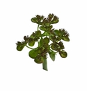 "5.75"" Sedum Succulent Artificial Plant (Set of 12)"