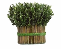 "Set of 2 - 11.4"" Preserved Boxwood Bundle"