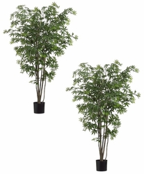 Set of 2 - 5' Japanese Silk Maple Trees - 572 Leaves