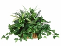 "Set of 4 -14"" Artificial Silk Aglonema, Fern  and Pothos Ledge Arrangement in Basket"