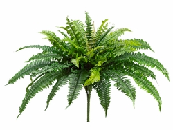 "23"" boston silk fern plants - set of 6 - artificial ferns"