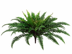 "26"" Artificial Fern Plants with 67 fronds - Set of 6 - Non Potted"