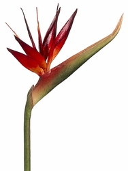 "Set of 6 - 39"" Artificial Silk Bird of Paradise Sprays (shown in brick)"
