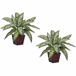 "12"" Silver Queen Silk Plant (Set of 2)"