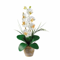 "21"" Single Stem Phalaenopsis Silk Orchid Arrangement - Cream"