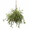 "20"" Artificial Spider Plant Hanging Bush in Basket"