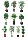 Ten Assorted Artificial Trees Package in Designer Conatiners