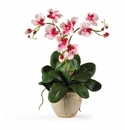 "25"" Triple Mini Phalenopsis Silk Orchid Arrangement"