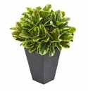 Variegated Rubber Artificial Plant in Slate Planter (Real Touch) -
