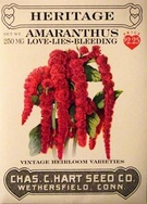 Heritage Amaranthus Love-Lies Bleeding