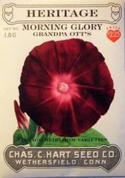 Heritage Morning Glory Grandpa Ott