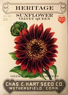 Heritage Sunflower Velvet Queen