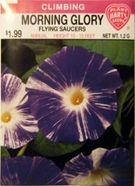 Morning Glory Flying Saucers