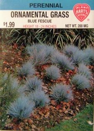 Ornamental Grass - Blue Fescue