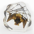 Large Brown Bat in Clear Lucite
