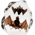 Large & Small Brown Bat in Clear Lucite