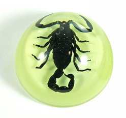 Small Black Scorpion in Clear Lucite Magnet