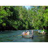 McKenzie River Guided Fly Fishing Trip