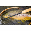 Winston Nexus Fly Rod