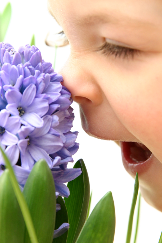 Babies Can Smell While Inside The Womb