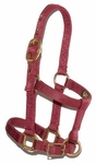 Big D Mini Nylon Halter