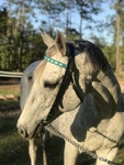 Custom Laced Browband Race Headstall