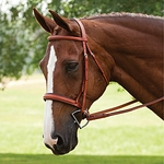 Hunter/Jumper and All Purpose Bridles