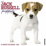 Just Jack Russell Puppies