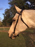 Leather Race Headstall Brown or Black