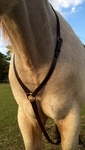 Race Leather Yokes or Martingales