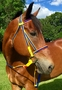 Tack Shack Nylon Race Bridle Set
