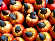 Colossal Cashew Facts