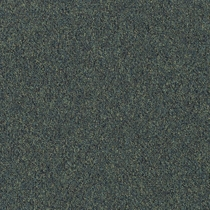 Patcraft Homeroom II 26 Tutor Carpet