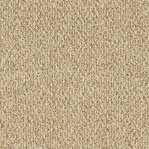 Patcraft Socrates II 26 Berkeley Carpet