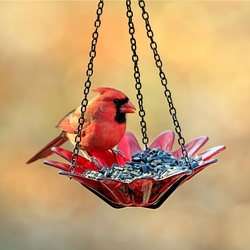 Hanging Glass Bird Feeder