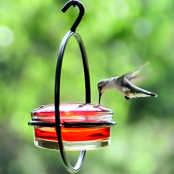 id photos garden ever post patio facebook shared hummingbird feeder media a best humming bird