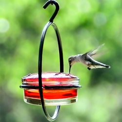 Sphere Glass Hummingbird Feeder