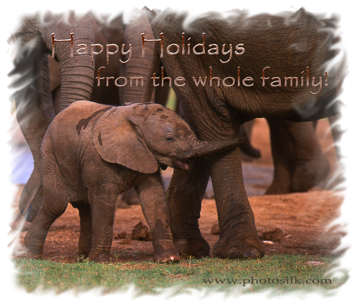 Happy Holiday Elephants