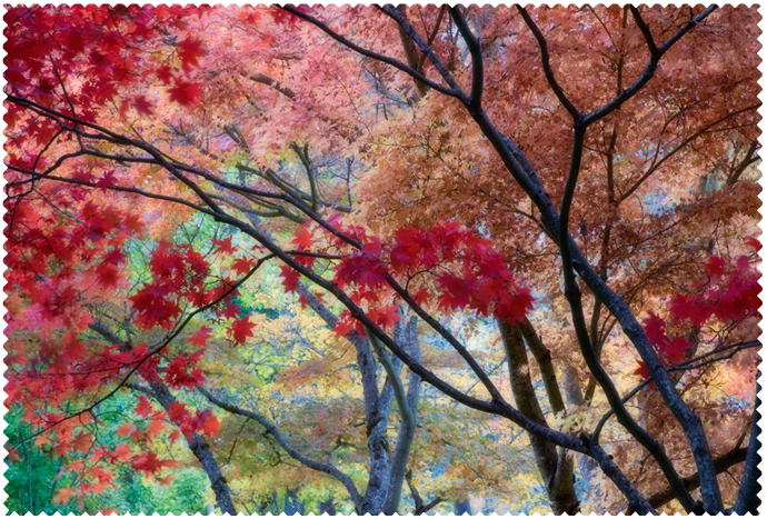 Painterly Maple