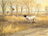 "<font size=""2"" font color=""red"">NEW</font> English Pointer and quail: Kansas Gold - giclee on paper"